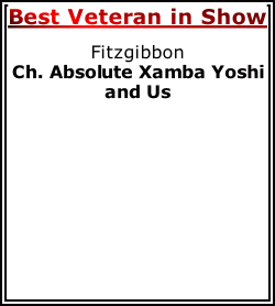 Best Veteran in Show Fitzgibbon Ch. Absolute Xamba Yoshi and Us