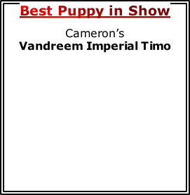 Best Puppy in Show Cameron's          Vandreem Imperial Timo